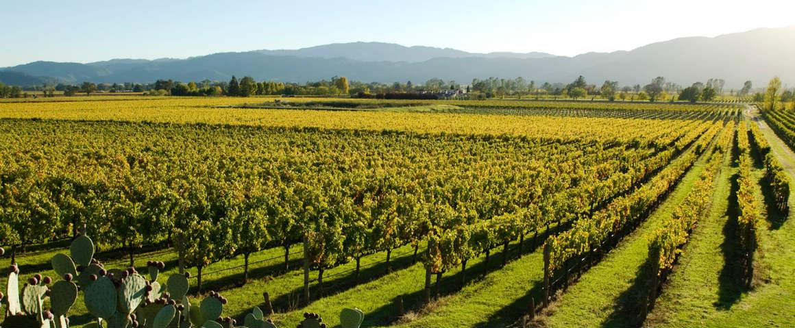 Calyx Gin: produttore di vino crea un gin basato sui terroir