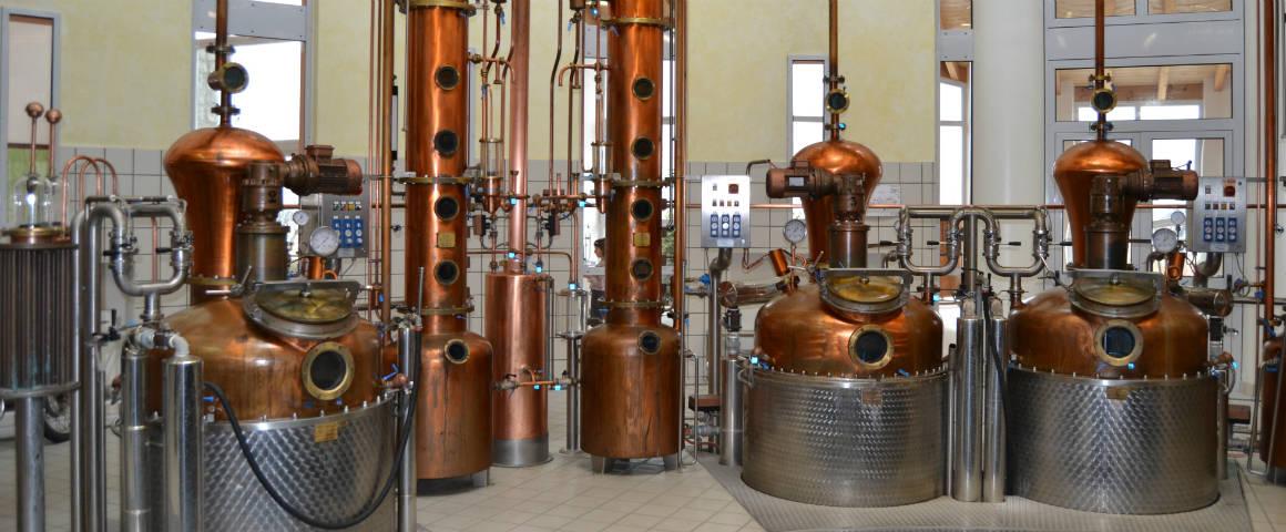Cosa dice il regolamento UE sulla produzione del gin?