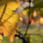 Le novità del mese: dallo sloe gin che cambia colore al gin di Sauvignon Blanc