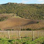 Sardegna da Bere: il tour de ilGin.it fra vini, distillati e piatti tipici sardi