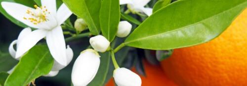 fioridarancio-lista