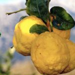 Gunpowder Sardinian Citrus Gin: un viaggio meraviglioso
