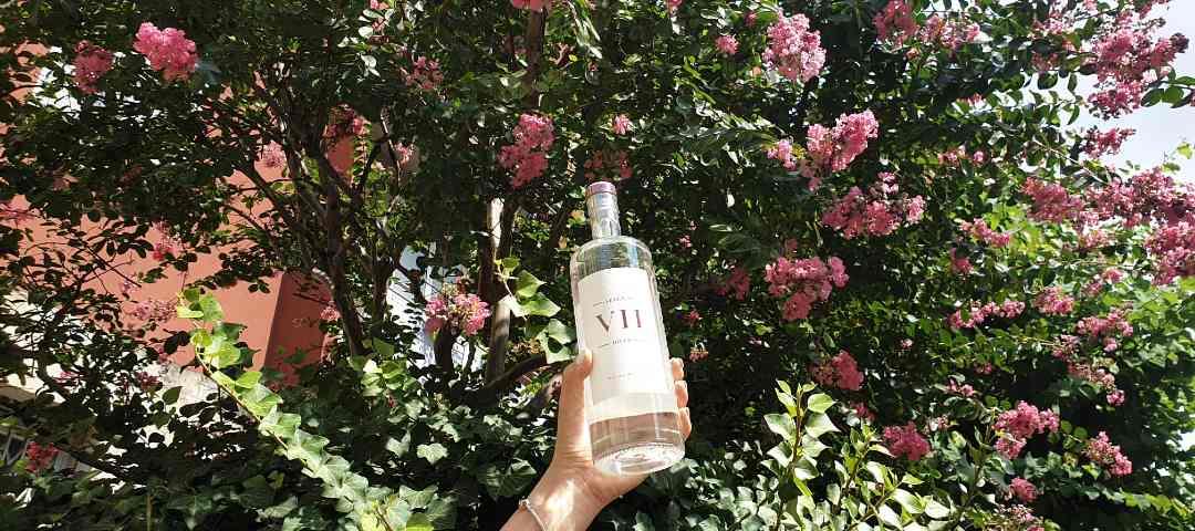 VIIhills gin nuova bottiglia